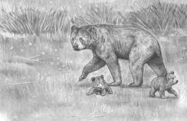 Ancestral Short Faced Bear family by Jagroar