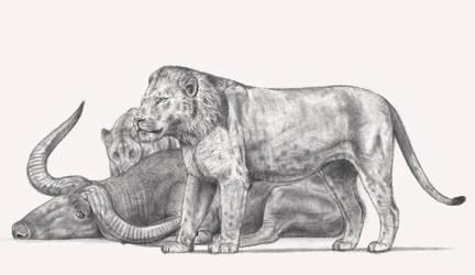 The Natodomeri Lion (pride devouring Pelorovis)