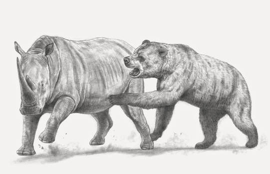 The African Short-faced Bear, attacking the rhino