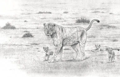 Colossal Steppe Cave lion / P. fossilis : Family by Jagroar
