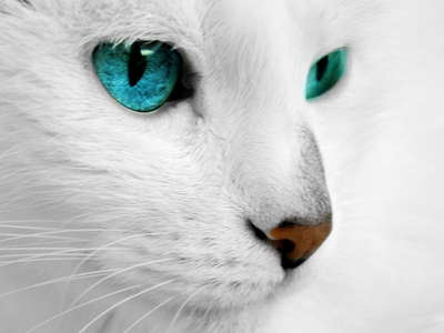 A white cat by T4ank