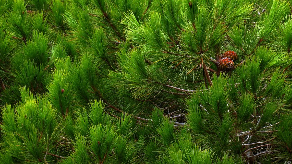 Feeling Pine by biffexploder