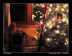 Kitty at Christmas by PhotographyByIsh