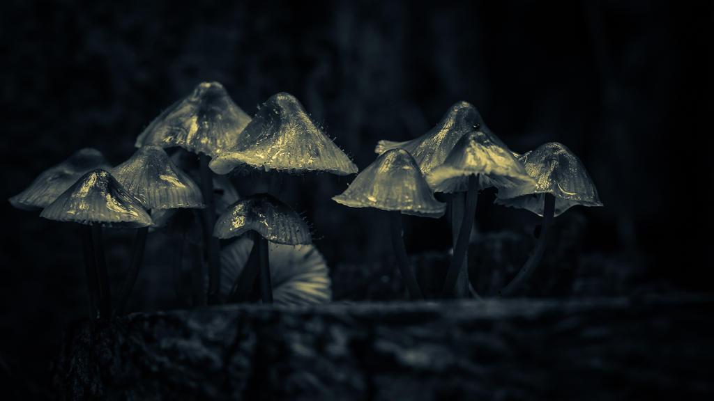 Mushroom mushroom 2 by Kovski