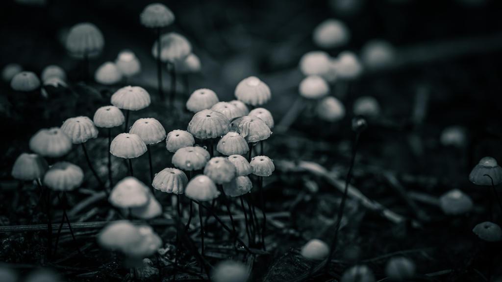 Tiny mushrooms by Kovski