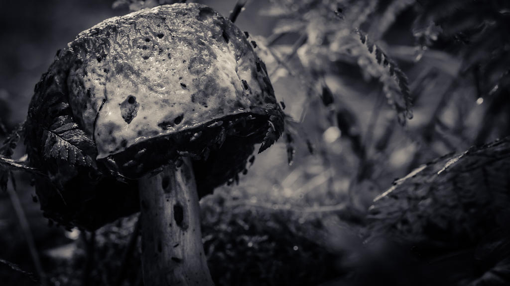 Spooky mushroom by Kovski