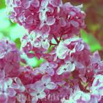 goodbye, spring by elalma