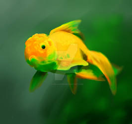 Goldfish Green Pride