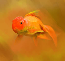 Goldfish Orange Pride