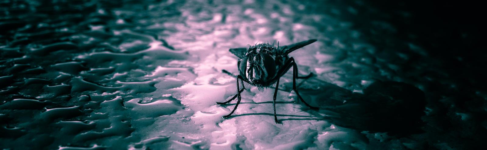 a fly's landscape by paddyola