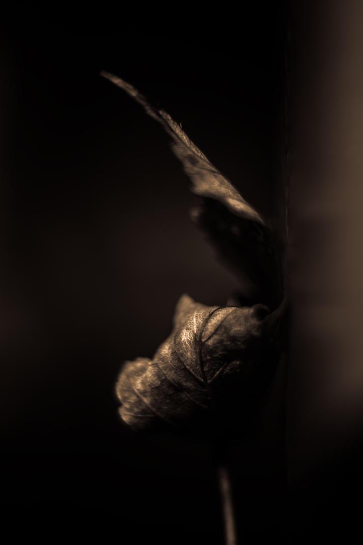 deadleaf yoga 2 by paddyola