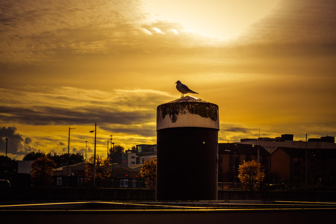 gull popping colour by paddyola