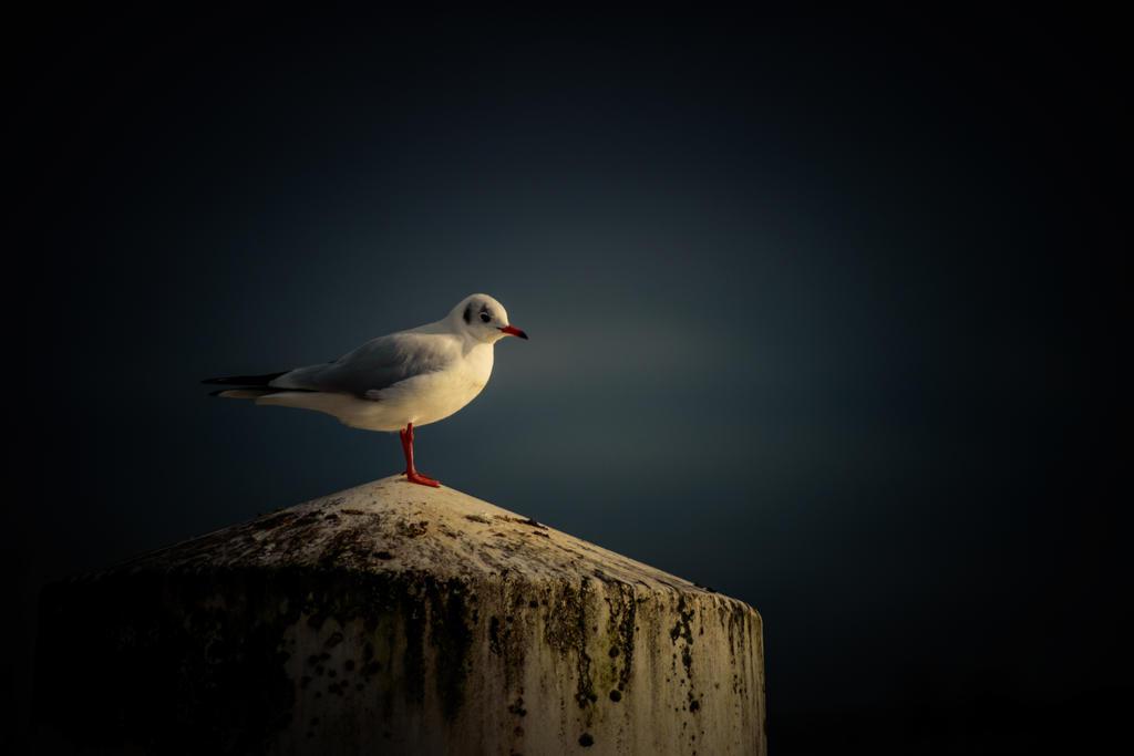 vantagepoint by paddyola