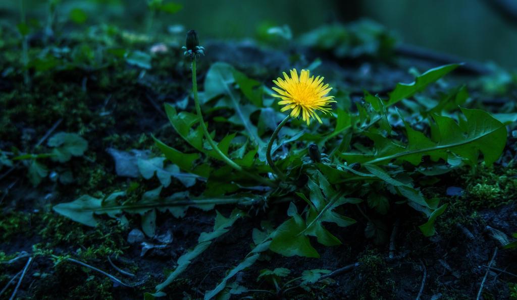 yellowweedypeethebed by paddyola