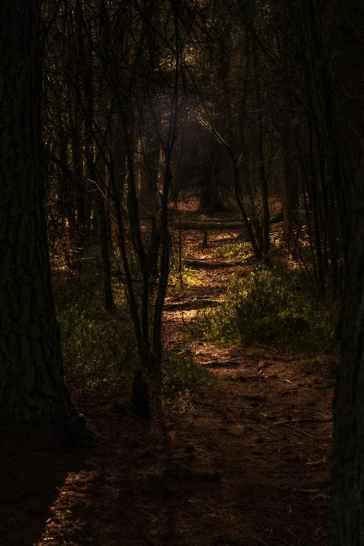 a path lit by paddyola