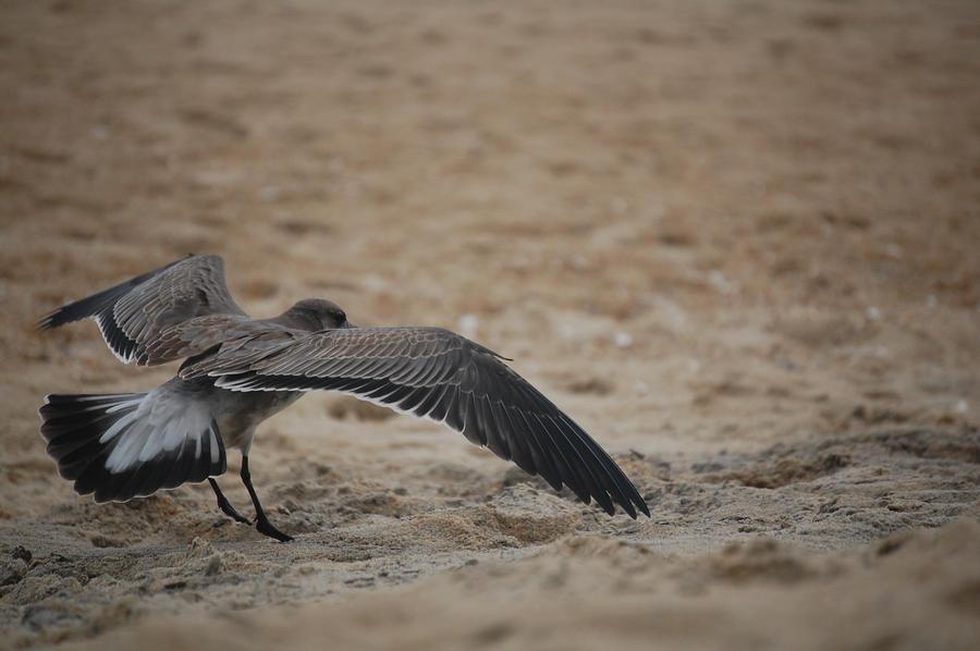 Bird: flying III by illusionistsmemories