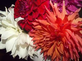 Happy Birthday Vesy by A-Negative-Blood