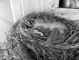 baby birds by A-Negative-Blood