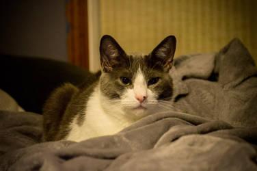 Am I A Cat?? by duelmasterdestroyer