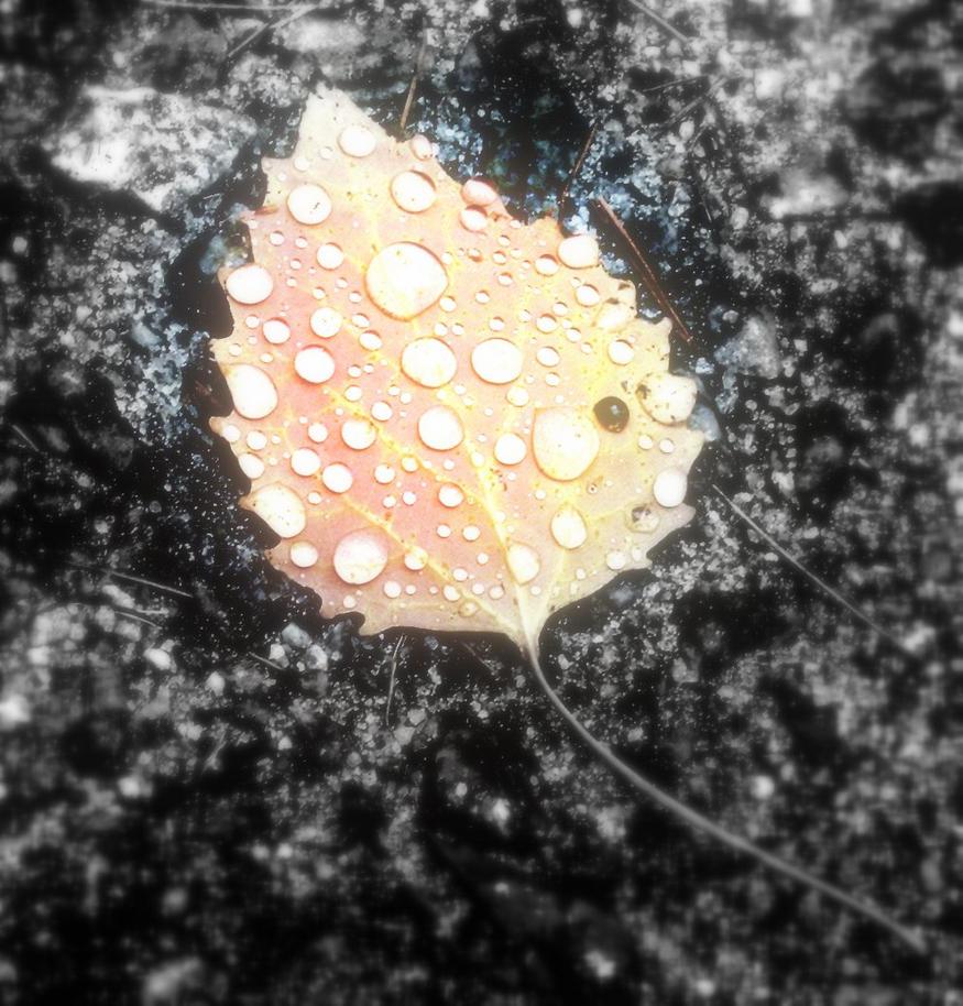 Autumn Rain by orrin-witt
