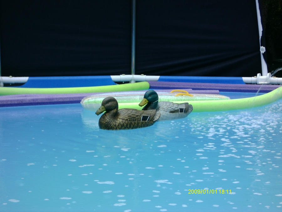 Quack by ougil