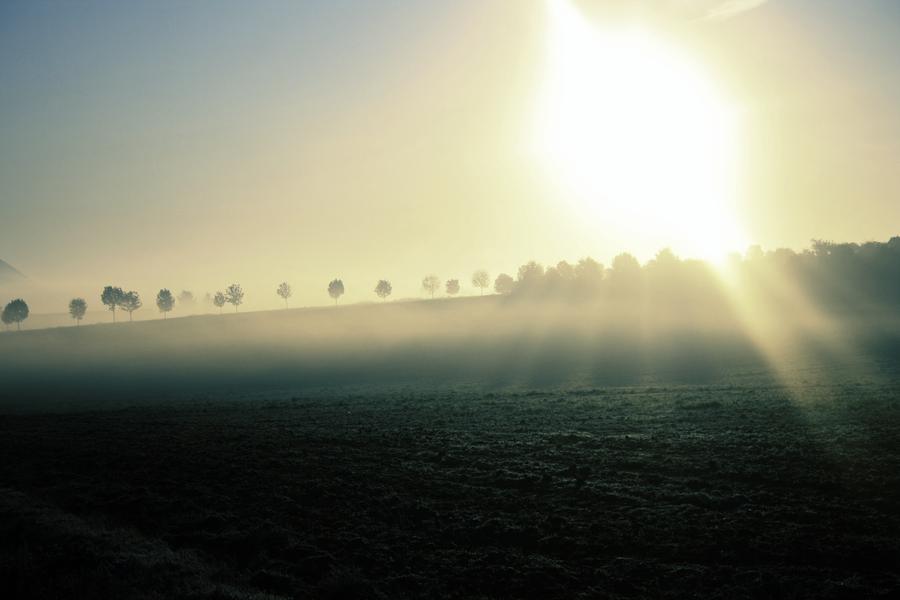 fog by lsalsa