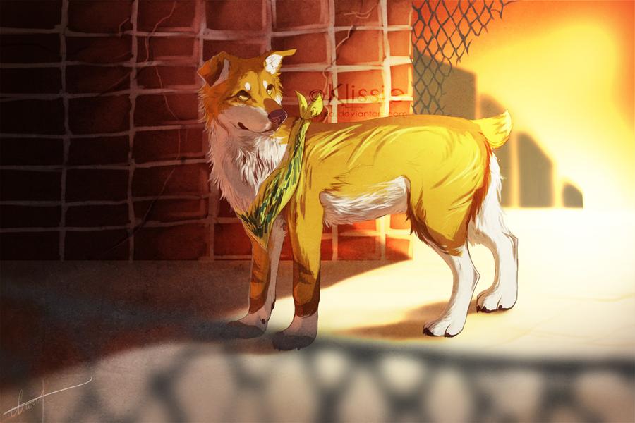 Dingo by Klissie