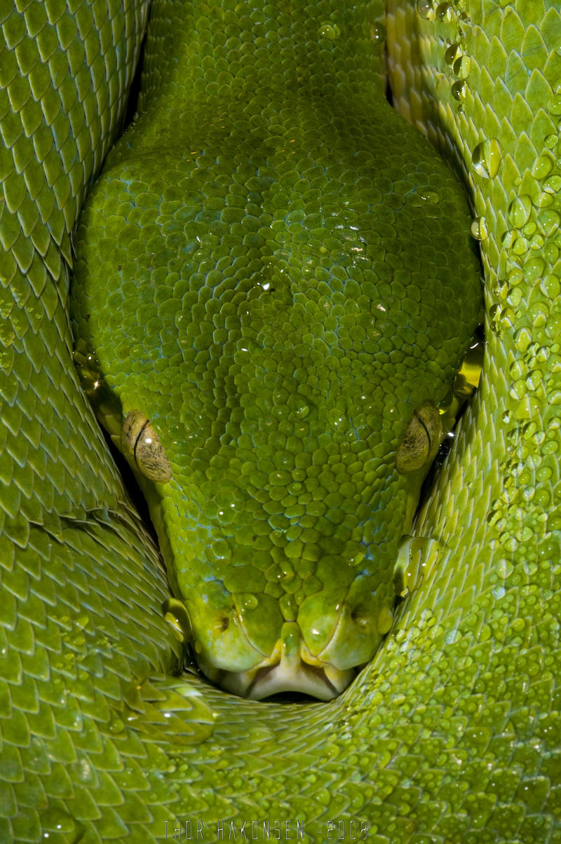 Green by ThorHakonsen