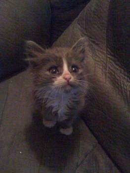 SeaBiscuit The Cat
