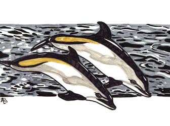 Atlantic White Sided Dolphin by sohalia