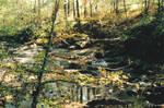 The Creek - 1