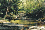The Creek - 2
