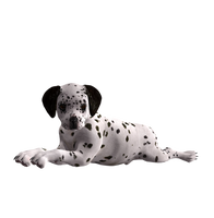 Puppy Stock Png 4 by Direwrath