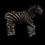 Zebra Mare Png Stock