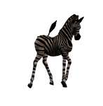Zebra Foal Png Stock 2
