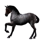 Fantasy Horse Png Stock 3