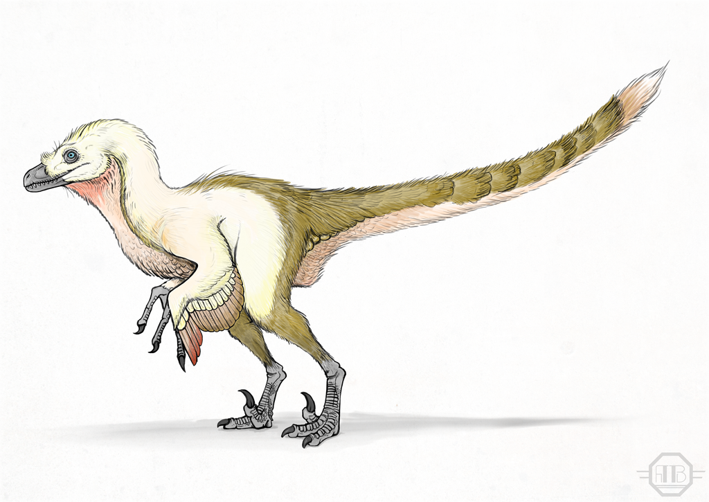 Velociraptor by Andrew-Graphics on DeviantArt