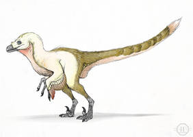 Velociraptor by Andrew-Graphics
