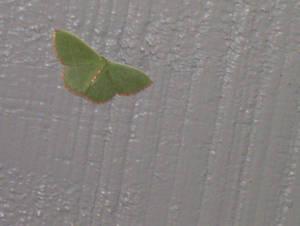 Pretty Butterfly 2