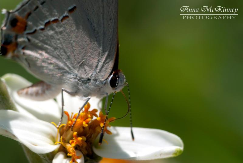 Moth In Grey by Annushkka