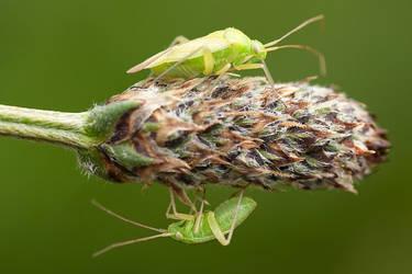 2 Bugs