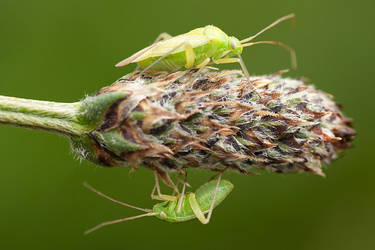 2 Bugs by RaikiriChidori