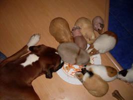 Feast by Falkenhund
