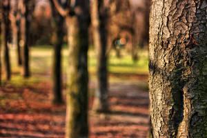 Tree. by QuiZ04291993