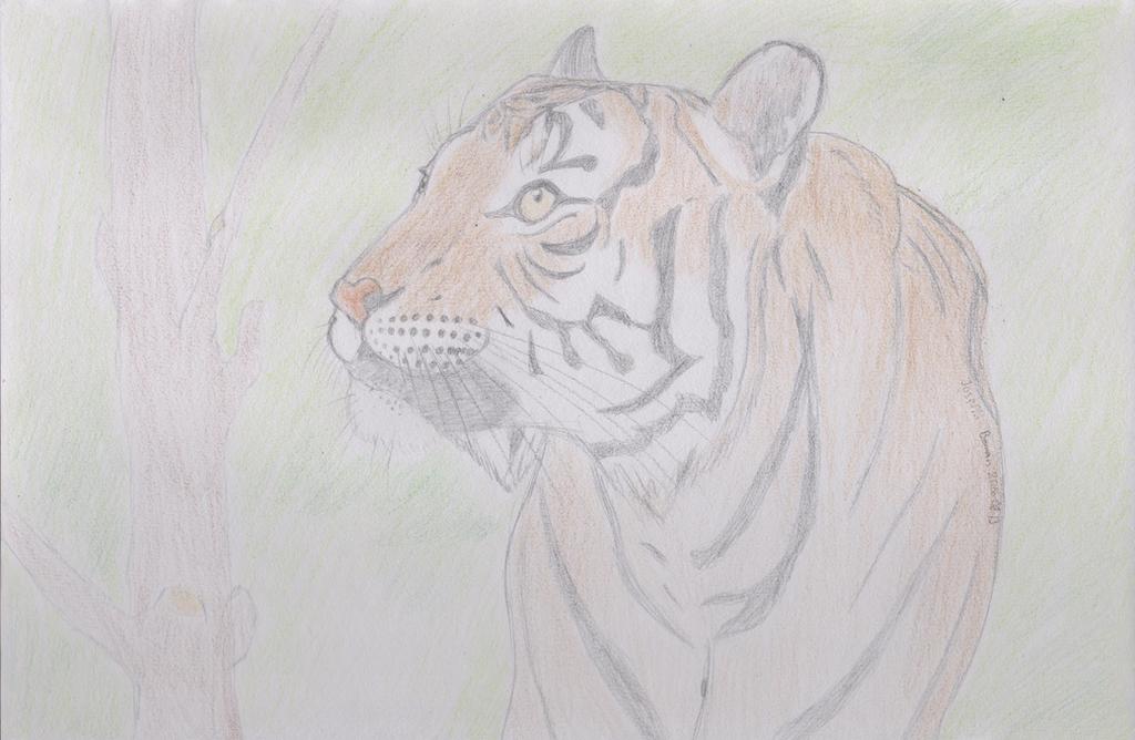 malayan tiger drawing - photo #21