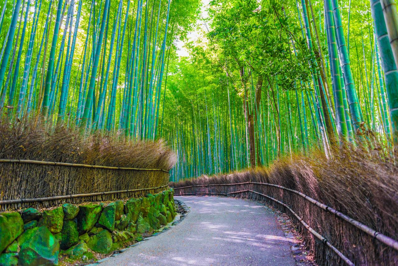 how to get to arashiyama bamboo grove