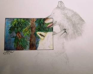 Wolf couple by Klau--Lion-Heart