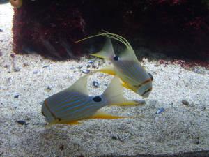 Sea life 033 by Kowia