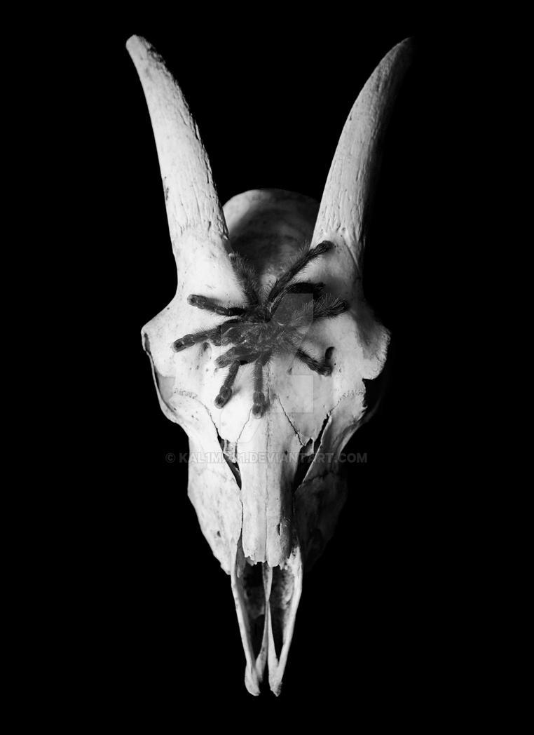 Tarantula and Goat Skull by KAL1MAR1
