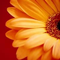 Flower by pinkNugg